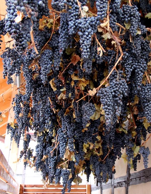 Das Weingut Kuhnle hat einen bsonderen Wein aus getrockneten Trauben gekeltert, der etwas staubig schmeckt, ziemlich reinhaut und eigentlich gar kein Wein ist. Ähnlich dem Amarone oder dem Ricioto in Norditalien.Foto - Pavlovic                 U N B E R B E I T E T